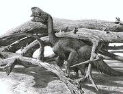 Oviraptor raul martin