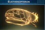 Eusthenopterons34