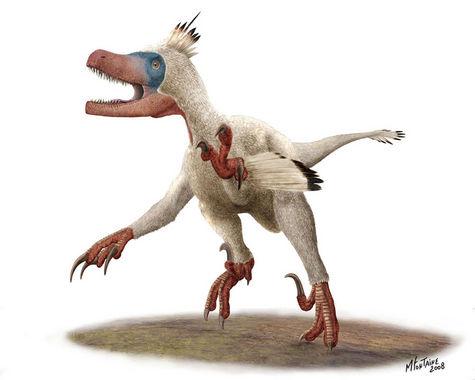 Variraptor2