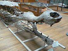 220px-Sarcosuchus imperator side