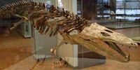 Mastodonsaurus/Gallery