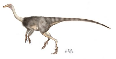 Anserimimus planinychus by unlobogris