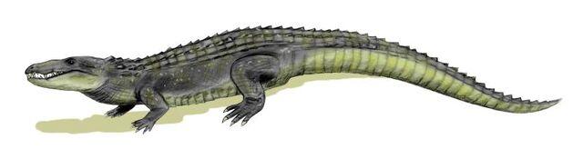 File:Mahajangasuchus body.jpg