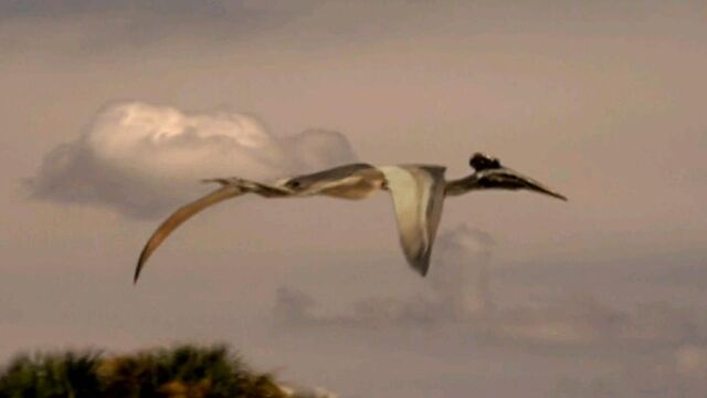 File:Quetzalcotlus flying high.jpg