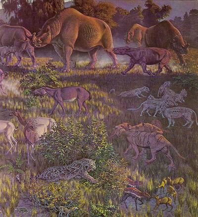 772px-Oligocene