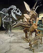 Allosaurus attacks Stegosaurus-0