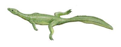 Miodentosaurus BW