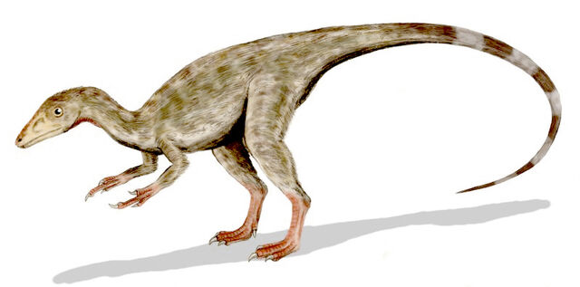 File:Compsognathus BW.jpg