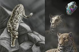 Pantera blytheae