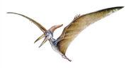 Pteranodon hernandez