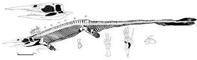 Xinpusaurus588