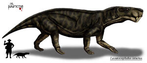 Leontocephalus intactus