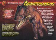 Giganotosaurus front