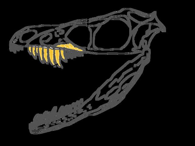 File:Sinornithosaurus Skull.png