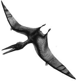 Araripedactylus