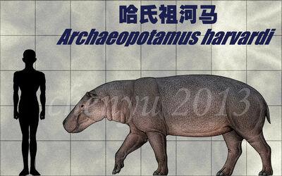 Archaeopotamus harvardi by sinammonite-d6rrh84