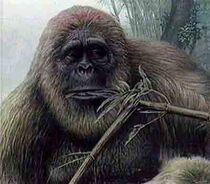 UGorillaGigantopithecus
