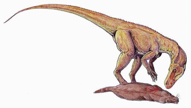 File:800px-herrerasaurus db.jpg