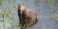 Copybare