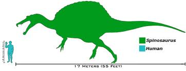 File:Spino SIze.jpg