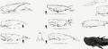 2 concept art whales.png