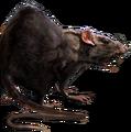 Rat concept.png