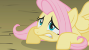 File:180px-Fluttershy is not so ready S01E07.png