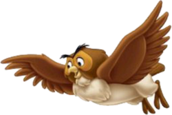 DMW-Owl