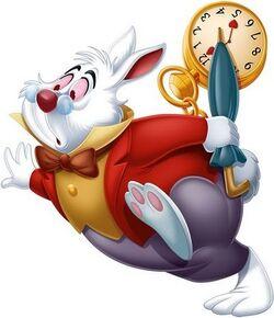 DMW-White Rabbit