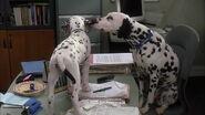 102-dalmatians-disneyscreencaps.com-2551