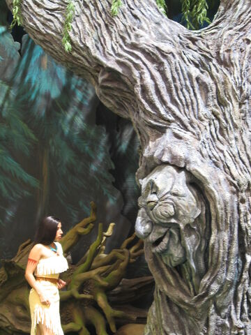 File:Grandmother Willow.JPG