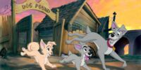 Lady and the Tramp II: Scamp's Adventure/Gallery