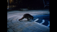 Raccoon from A Country Coyote Goes Hollywood