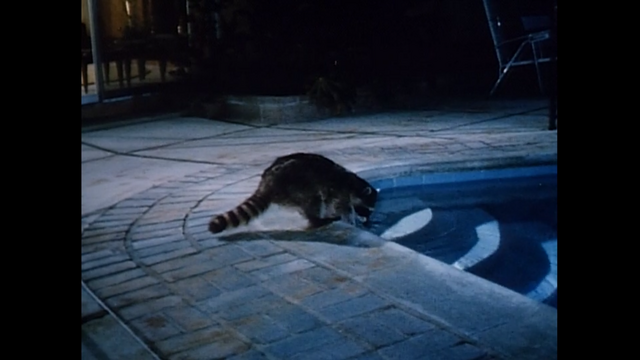 File:Raccoon from A Country Coyote Goes Hollywood.png