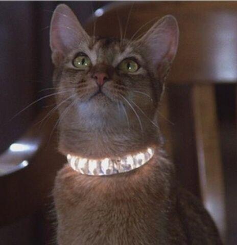 File:Jake the Cat.jpg
