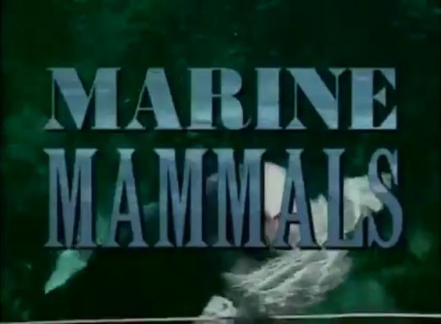 File:Marine Mammals Bill Nye.png