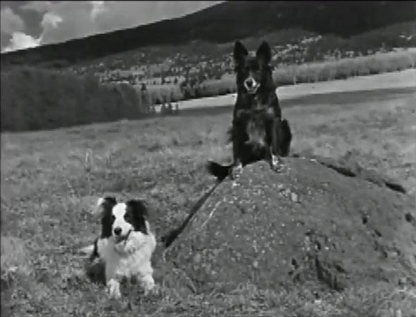 File:Arizona sheepdog 2dogrock 600x457 opt.jpg