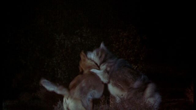 File:Old Yeller vs the Wolf.jpg