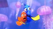 Dory-marlin-jellyfish