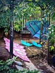 Leaves - backyard blog