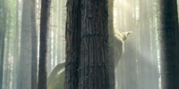 Pete's Dragon (2016 film)/Gallery