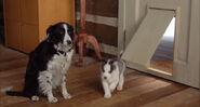 Snow-dogs-disneyscreencaps.com-10695