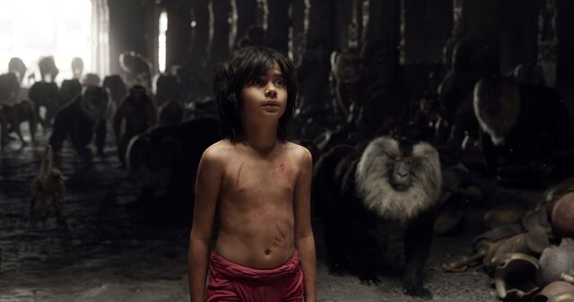 File:Mowgli and Monkey's 2016.jpg