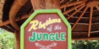 Rhythm of the Jungle