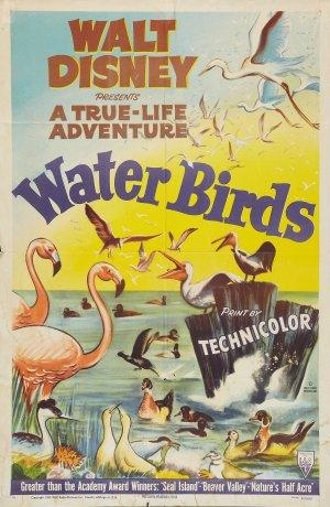 File:Water Birds FilmPoster.jpg