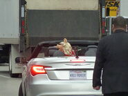 TheMuppets-WorldPremiere-ElCapitan-(2011-11-12)-05