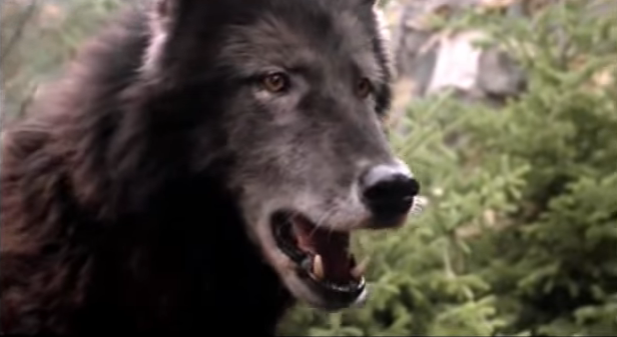 File:Timber Wolf 20.png
