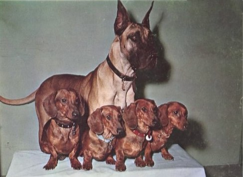 File:Brutus and the Dachshund Girls.jpg