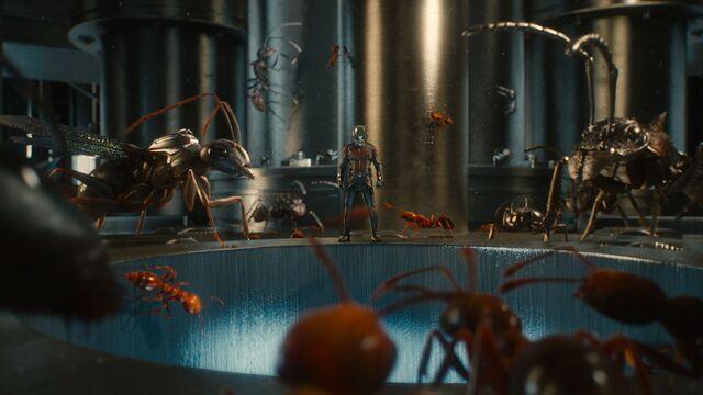 File:Ant-Man (film) 89.jpg