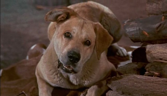 File:Old-yeller-disneyscreencaps.com-2198.jpg